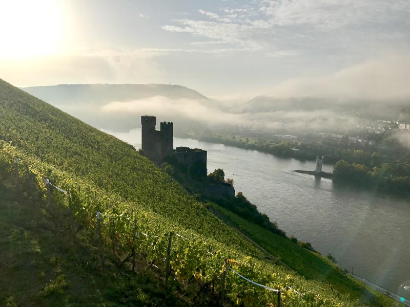 View across the Rhine and the vineyards of Rüdesheim